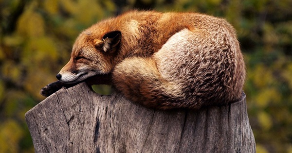 20 Cute & Peaceful Photos Of Sleeping Animals
