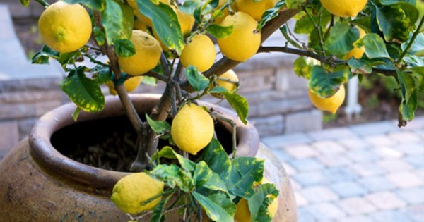 10 Easy Guides To Grow Vegetables Fruits In Containers